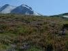 07 - Blühende Bergwisen am Mount St Helen